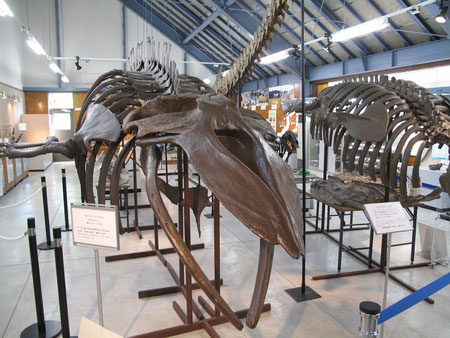 隣接する化石館では色々な体験も出来る