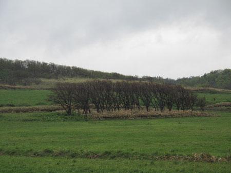 5月23日16:56 オロロンライン 木が風で・・