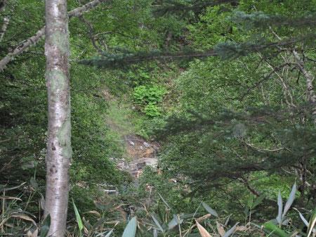 木々の隙間から温泉が見えます。16:46