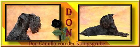Hier gehts lang zum hübschen Don & seinem netten Frauchen Evelyn.Eine sehr liebevoll,gestaltete Homepage!