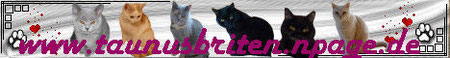 Wer wunderschöne Miezekatzen sehen möchte, der wird bei Moni`s Briten-Bande und ihrer tollen Page fündig!