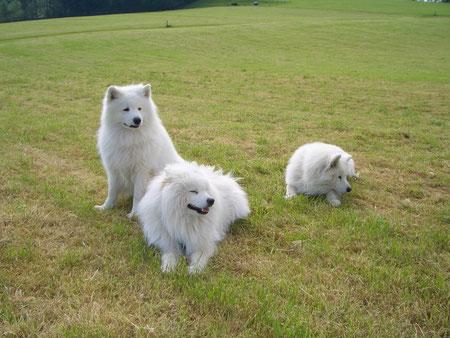 Tajmyr, Ujar und Merlin