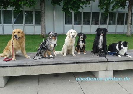 Hundeführerschein-Kurs: Warten auf die Tram...