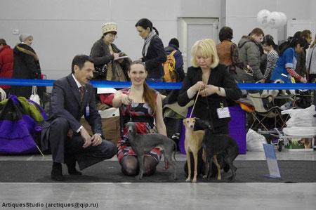 """23.03.2013 на выставке """"Евразия-1"""" собаки нашего питомника и наши щенки показали отличные результаты: French Cancan du Domain de Chanteloup - отлично, 1 место, победитель класса, САС, лучший кобель, САСIB, Чемпион Евразии!!! Zucchero Nero die Raggi di Lun"""