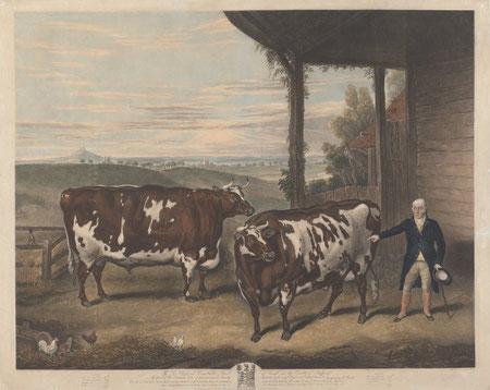 Pair of enormous prize bulls