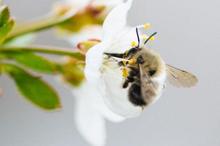 Kinderhomöopathie hilft bei Allergien.