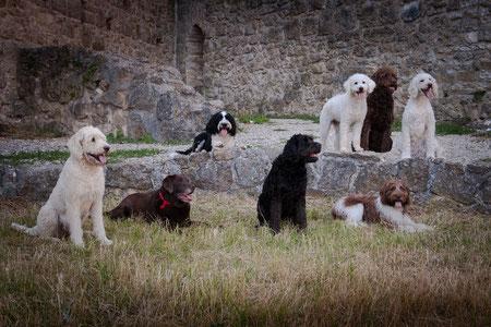 Kosten Für Einen Hund Labradoodle Von Burg Wolfs Webseite