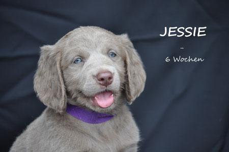 Unsere freche Jessie, inzwischen ist nichts mehr vor ihr sicher!