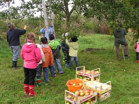 Andrang an der Leiter zum Apfelernten