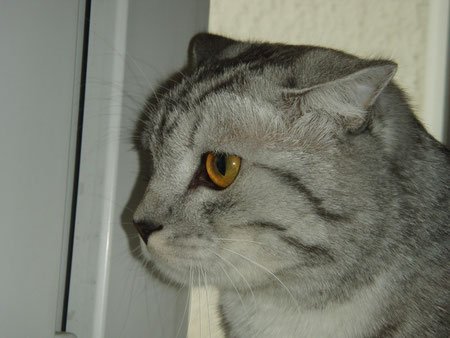 Наш кот