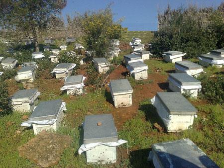 REGION DU SAHEL EN ALGERIE