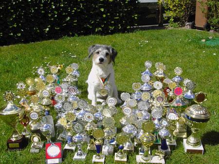Ronja mit ihren 92 Pokalen und Medaillen :)