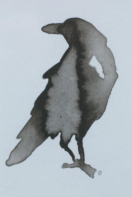 kraai crow