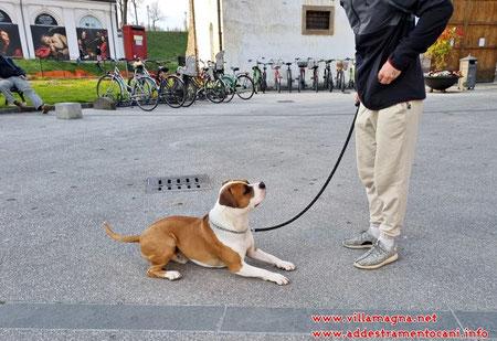 Addestramento cani - condotta al guinzaglio