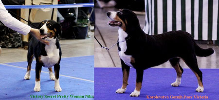 The puppy Victory Secret Pretty Woman Nika out of my female and her mother - Korolevstvo Gornih Psov Victoria