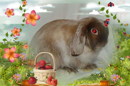 декоративный-вислоухий-кролик