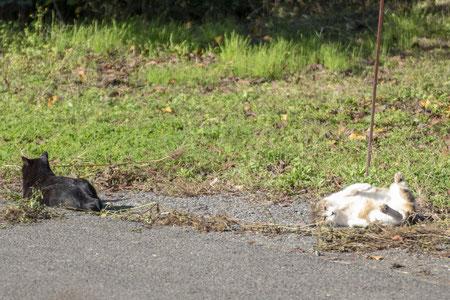 大島には猫が多い。見てると飽きないのは、どうして?