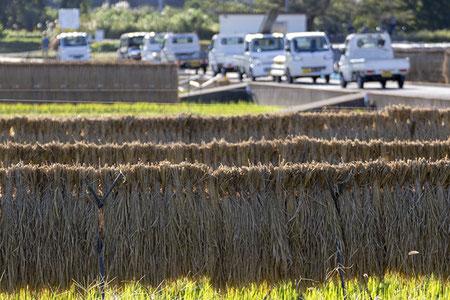 天日干しされた飯米の向こうでは、軽自動車の集会!? みんな忙しい秋の一日。