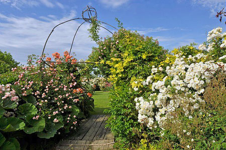 Les Jardins de Rocquelin sur La Route de la Rose du Loiret