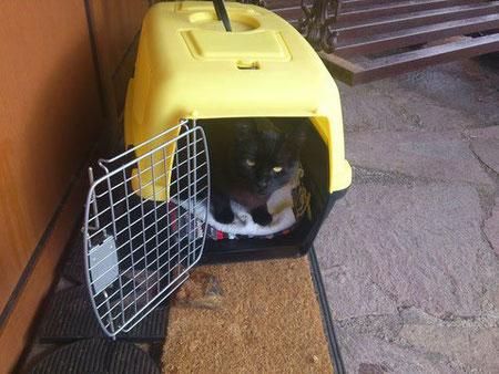Katzenratgeber: Naturheilkunde und Homöopathie für Katzen