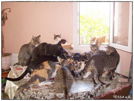 Miezekatzen in Yenifoca, Nilgün Karsilayan, Nilgün Obenik, Tierhilfe Türkei, Yenifoça, TESSA e.V., Nilgün Karsilayan, Tierschutz Türkei, Tierhilfe- Foca