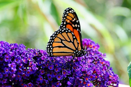 Istria top things to do - Butterfly Garden - Copyright  tdlucas5000