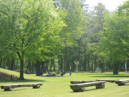 新緑の中でピクニック