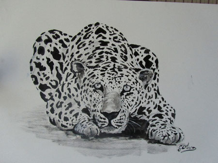 Leopardo BeN