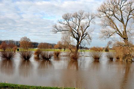 Rhein b. Kaiserswerth, Jan. 2011
