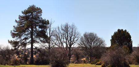 Cuatro tipos diferentes de árboles... juntos