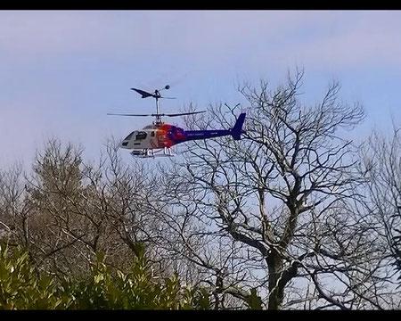 Heli Modellflugschule, Modellhelicopter, RC-Modellhelicopter