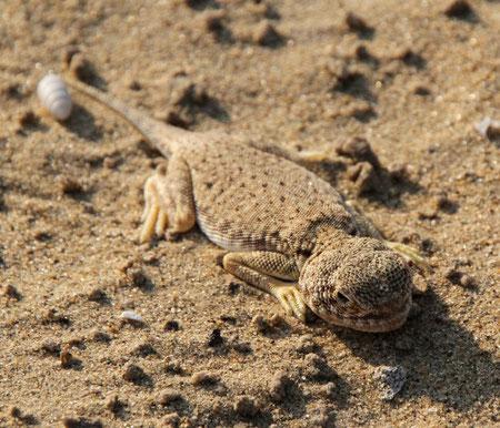Tiere mitten in der Wüste