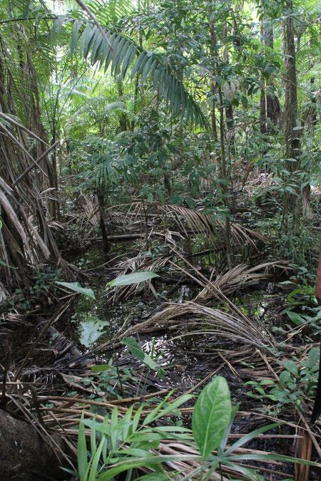 im Urwald waren tausende von Mücken