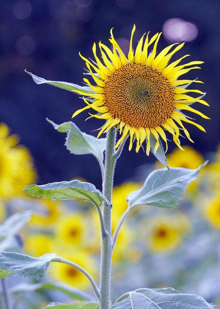 eine einzelne Blume