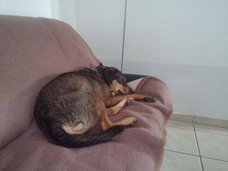 Remo fand sein Sofa in Metelen.