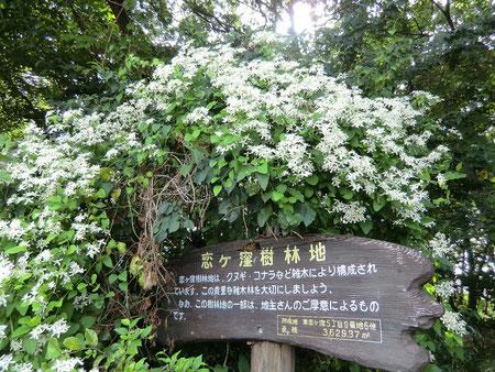 9月4日(2012) 恋ヶ窪樹林地の案内板(国分寺市)