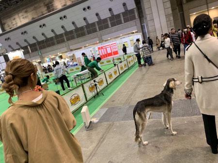 DOG SALON SEALY ドッグサロンシーリー 港区 表参道 南青山 外苑前 トリミングサロン トイプードル 射手今日子