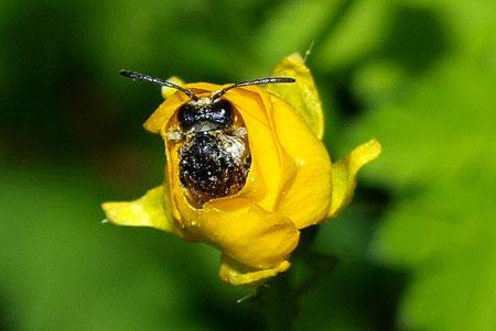 Erwachender Käfer