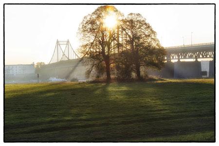 Rheinwiesen an der Uerdinger Brücke