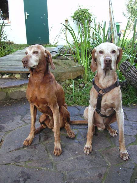 Jetzt sind die Brüder,  Santos und Enzo im Hundehimmel wieder vereint und können miteinander spielen