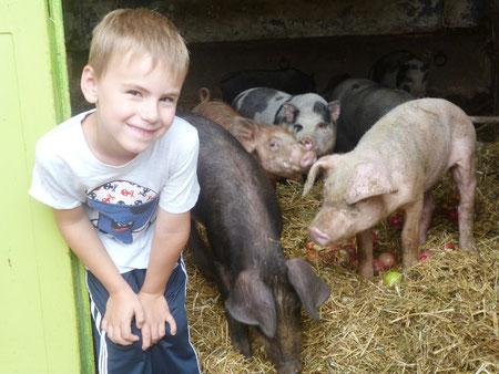 Tierschutznachwuchs beim Schweine füttern