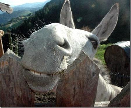 Kuckuck :-)  Willst du Pate werden?         Quelle Foto: 1,000,000 Pictures