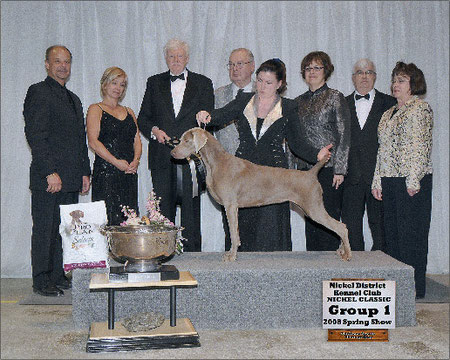 Ch Instar's Simplee the key V Nimiq, a Top 5 Canadian Weimaraner