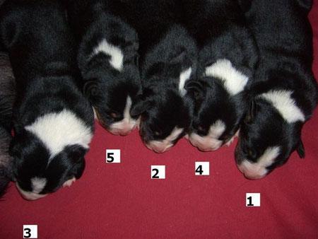 hier die Hündinnen, die Nummer 4 ist unsere