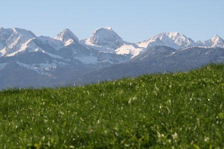 Weiden wo die Kühe das Gras kriegen, umgeben von den Berner Alpen