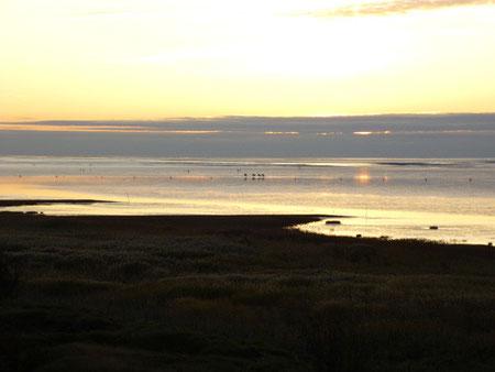 Blick vom Aussichtsturm in der Duhner Heide auf das Watt mit Reitern im Sonnenuntergang
