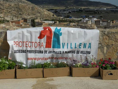 Die Protectora Villena