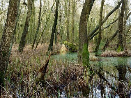 Bruchwälder tragen zum landschaftlichen Reiz des NSG bei