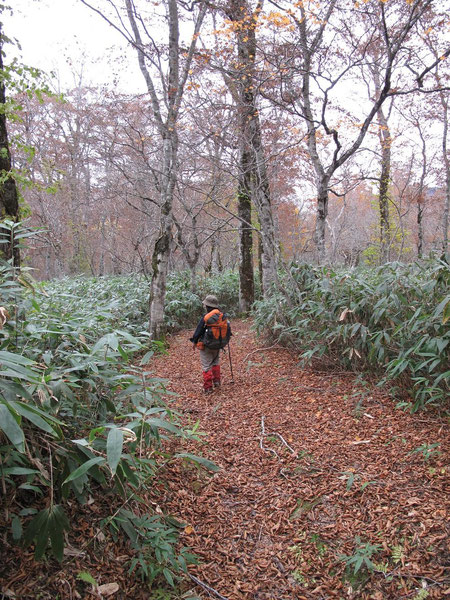 ブナ林の登山道