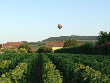 Juillet 2013, à Puligny Montrachet